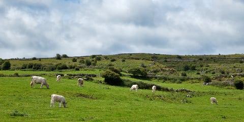 Bild Irland