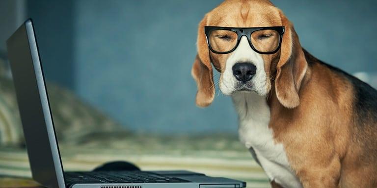Trend Bürohund